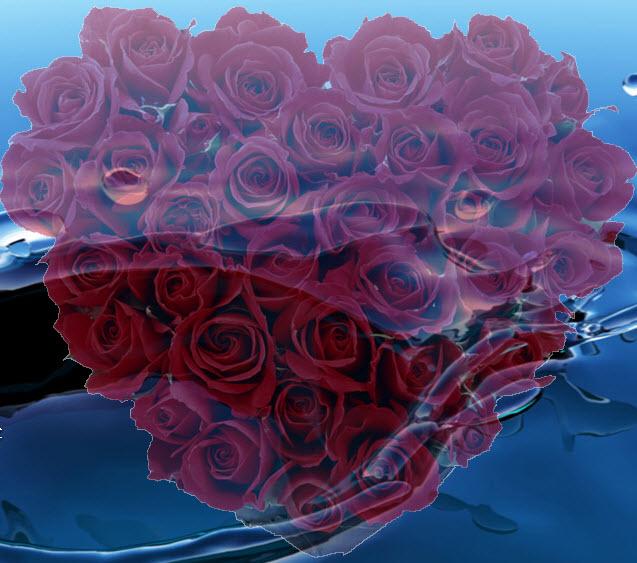 桌面上的玫瑰花