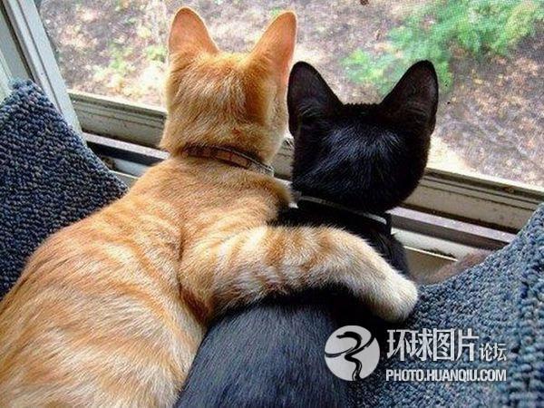Картинки про кошек и котят прикольные 35 фото