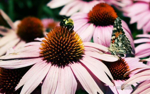 Windows 7高清自然的《明与暗》《花园的四季》 官方主题下载