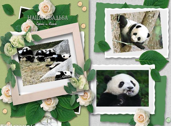 世界动物日主题PPT模板下载