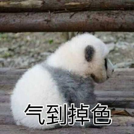 熊猫滚滚表情包