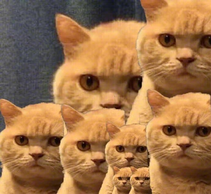 2015微信动态表情_暗中观察橘猫【高清】微信表情包下载|被橘猫锁定观察表情包 ...