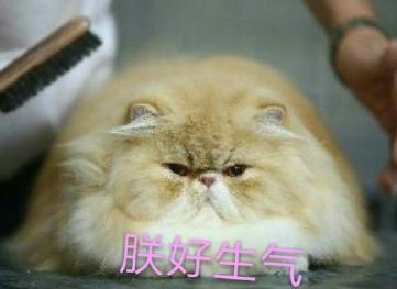 人民的猫奴表情包