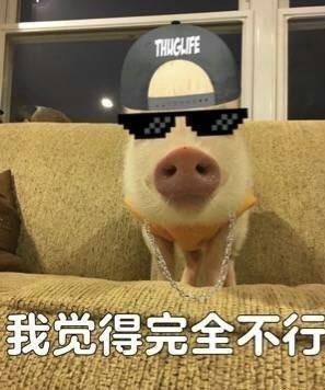 得OK小猪系列表情包下载 我觉得可以小猪梗表情无水印下载